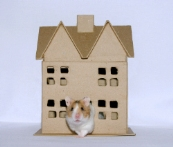 Hampster house